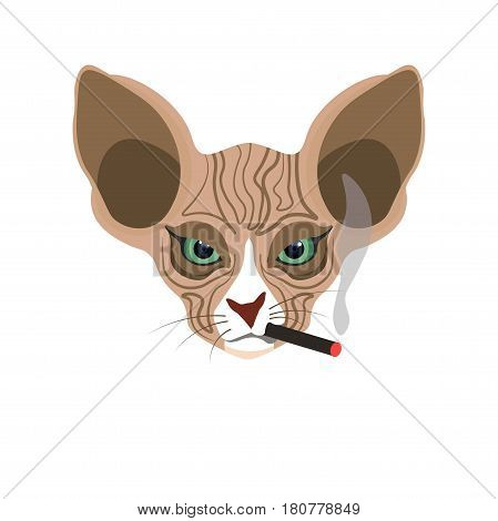 Sphynx hairless brown cat face with black smoking cigarette in mouth isolated on white. Vector colorful illustration in flat design of feline domestic animal head with big ears and green eyes