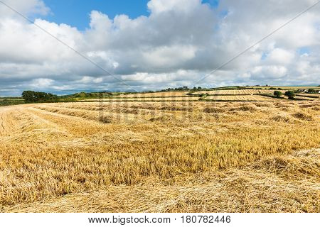 Cornwall countryside at harvest time cut hay fields stretch to horizon and cloudy sky