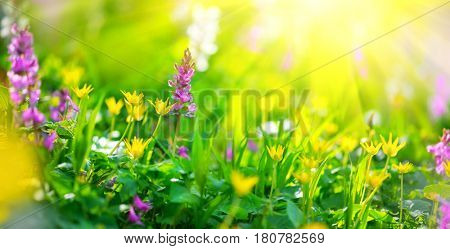 Beautiful meadow field with wild flowers. Spring Wildflowers closeup. Health care concept. Rural field. Alternative medicine. Environment