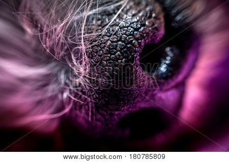 dogs snout or nose abstract close up macro photo