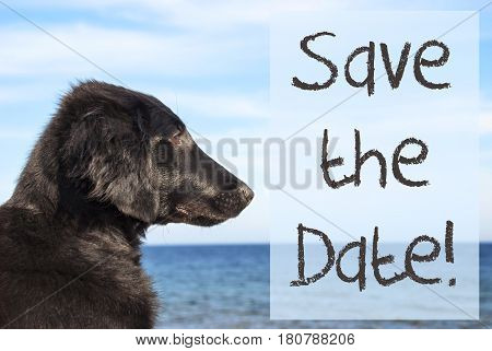 English Text Save The Date. Flat Coated Retriever Dog Infront Of Ocean. Water In The Background
