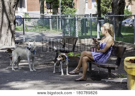 Montreal, Quebec - July 27, 2016 - Wide view of three dogs and a blond woman sitting on a park bench with her cell phone, on a sunny day in a dog park in Montreal, Quebec in late July.