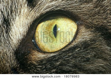 Extreme close-up of cat's eye.