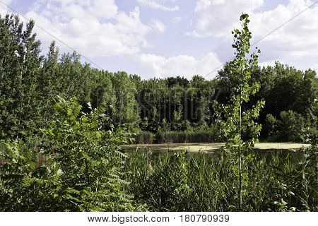 Wide landscape of trees and foliage surrounding a small marshy pond in Angringnon Park, Lasalle, Quebec with blues skies on a sunny day at the beginning of August.