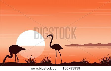 At sunset scenery with flamingo silhouettes vector illustration