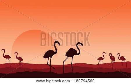 Collection of flamingo scenery silhouette design vector illustration