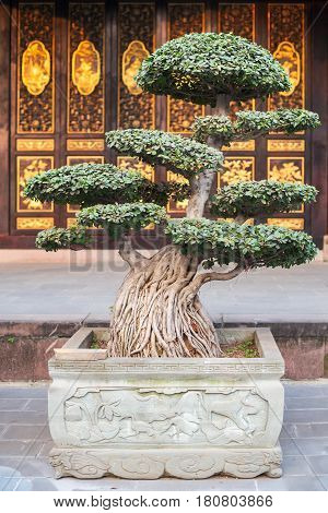 Bonsai In Front Of A Temple In China