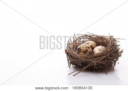 Quail eggs in a real nest on a white background with copy space.