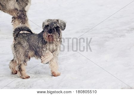 Cute dogs walking on snow