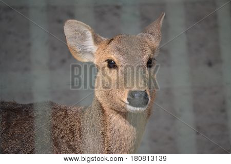 Deer inside a cage in Lucknow zoo in India