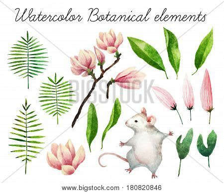 Big set of watercolor botanical elements. Beautiful botanical elements isolated on white background. Hand drawn plants and flowers for your design.