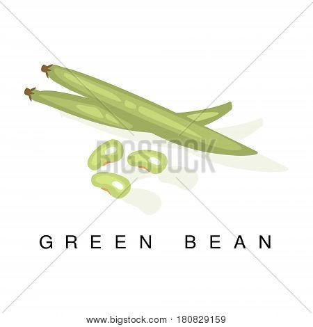 Green Bean Pod , Infographic Illustration With Realistic Pod-Bearing Legumes Plant And Its Name. Farm Natural Food Product Vector Drawing With Description.