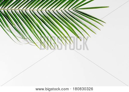 Floral pattern with green leaves of anthurium and palm for spring design on white background top view mockup