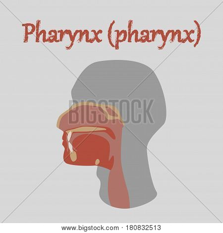 human organ icon in flat style pharynx