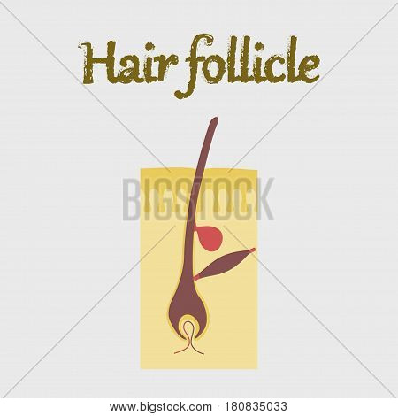 human organ icon in flat style hair follicles