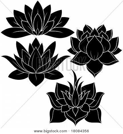 Lotus set vector