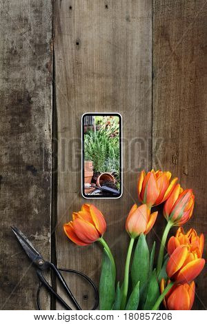 Overhead shot of a bouquet of tulips with a picture of a herb garden on a cell phone over a rustic wood table. Flat lay overhead view style.