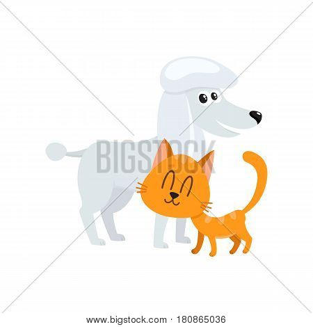 poodle dog dog and red cat, kitten characters, pets, friendship concept, cartoon vector illustration isolated on white background. poodle dog dog and red cat characters, friends