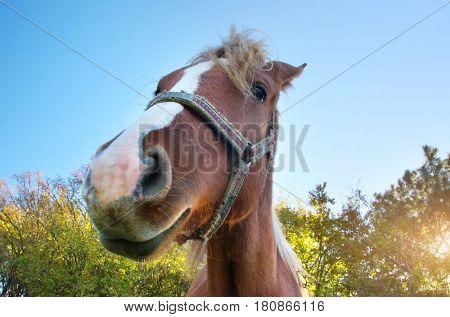 Horse portrait. Funny mammal scene.