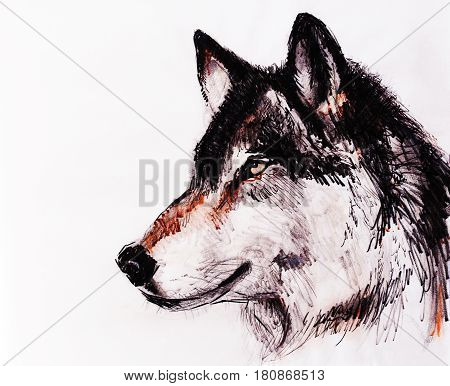Drawing wolf on old paper, original hand draw