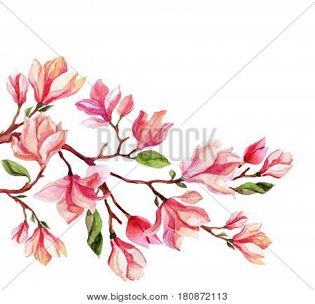 Watercolor magnolia flower card. Spring blooming branch on white background. Hand painted floral illustration