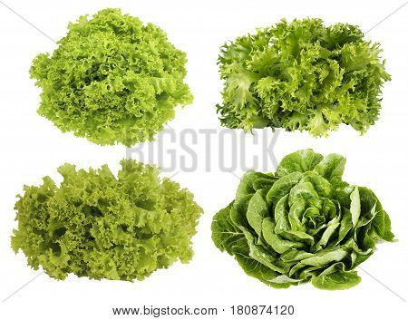 Collage of lettuce. Fresh green lettuce isolated on white background. Set of different foreshortening.
