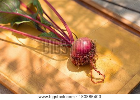Fresh beetroots with leaves just picked up from the garden beetroots are washed on wooden background.