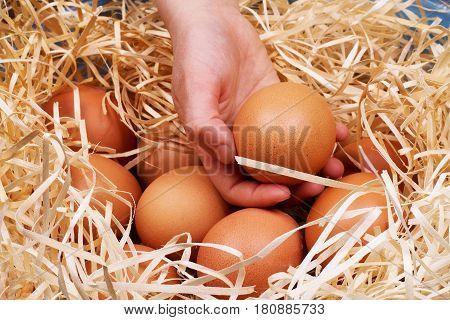 Eggs on wooden background Huevo, Uova, Huevos, Jajka, Yumurta, Vejce, Jajca