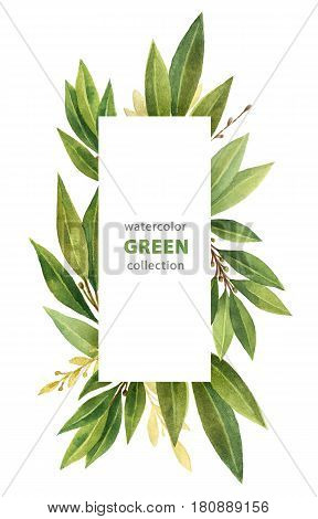 Watercolor Bay leaf vertical rectangular wreath isolated on white background.