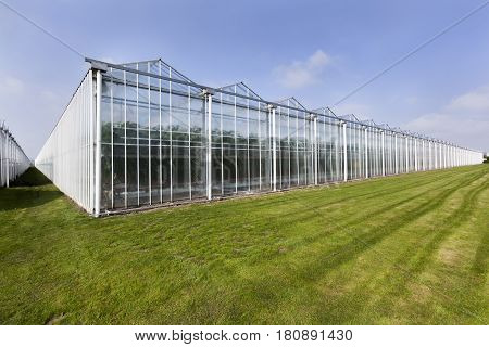 Greenhouse in the Westland in the Netherlands