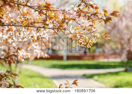 Tree flowers pathway in a Beautiful Park in a bright, sunny day