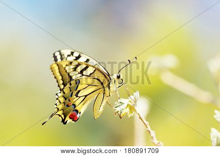 Colorful  butterfly sitting on  flower