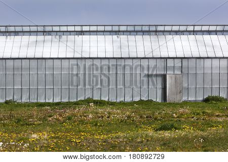 Greenhouse with side entrance in Westland in the Netherlands