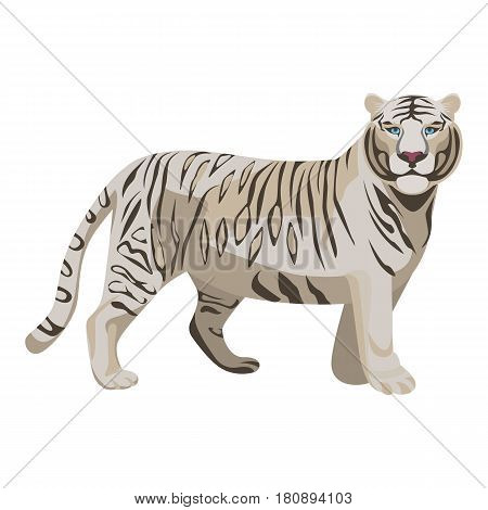 White or bleached tiger isolated on white. Predator rare animal with black stripes typical of Bengal tiger, but carries a white or near-white coat. Endangered wildlife mammal vector illustration