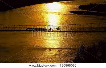 The cattle cross the drawbridge golden hour scene scenery in Xinjiang China .