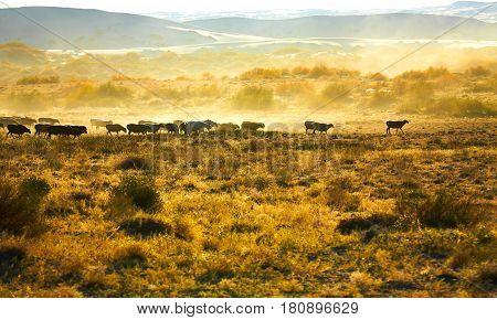 Beautiful misty morning scenery in Xinjiang China.