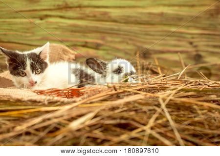 Cute small rabbit easter bunny and little cat kitten domestic pets with fluffy fur lying on sackcloth in wicker basket in natural hay on wooden background