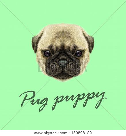 Vector Illustrated portrait of Pug puppy. Cute fluffy fawn face of domestic dog on green background.