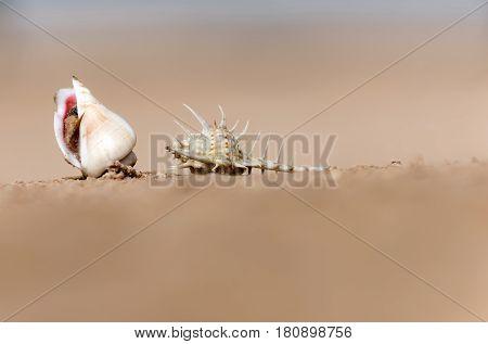 Beautiful Marine Snail Shells On Beige Background