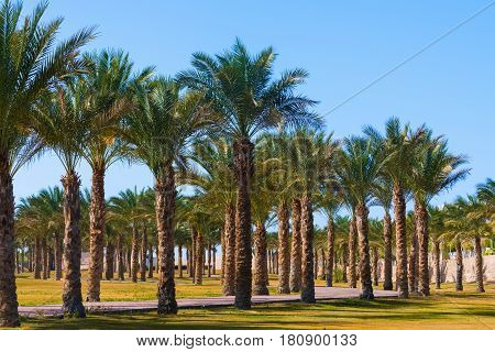 Idyllic Tropical Palm Trees Garden
