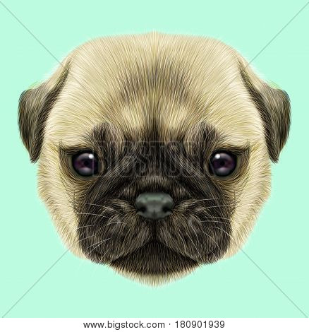 Illustrated portrait of Pug puppy. Cute fluffy fawn face of domestic dog on blue background.