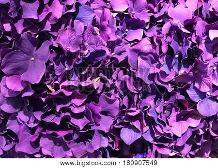 Abstract of beautiful purple bouquet flower for background