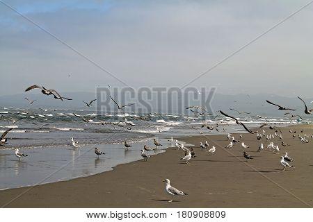 Seagulls at the Beach on a Foggy Day