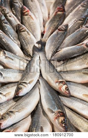 Fresh caught fish at the Rialto fish market - Venice, Venezia, Italy, Europe