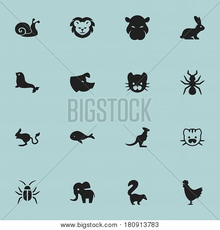 Set Of 16 Editable Zoology Icons. Includes Symbols Such As Jerboa, Cock, Beast And More. Can Be Used For Web, Mobile, UI And Infographic Design.