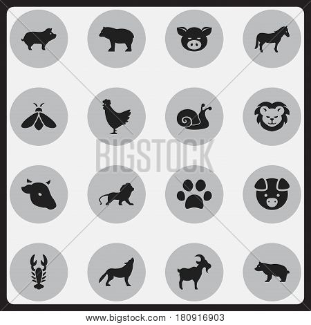 Set Of 16 Editable Zoology Icons. Includes Symbols Such As Cock, Wildcat, Honey And More. Can Be Used For Web, Mobile, UI And Infographic Design.