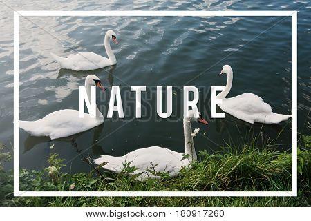 Nature geese garden environment park