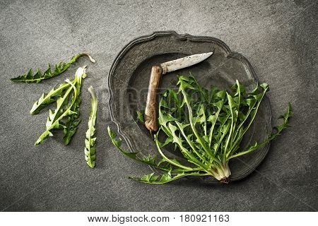 Fresh dandelion with knife on gray background overhead shoot
