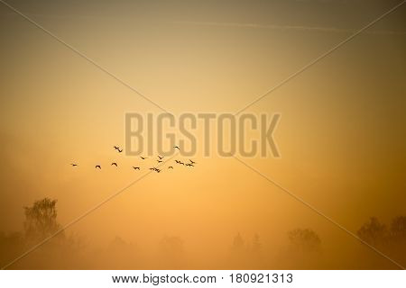 A Flock Of Cormorants Flies Over The Misty Land