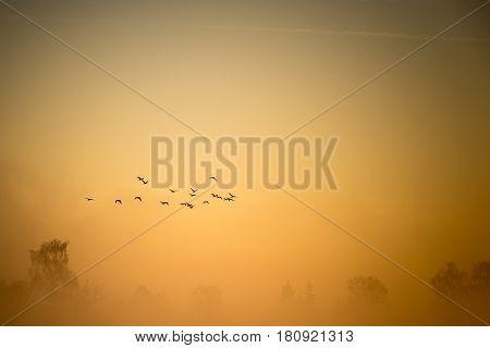 A Flock Of Cormorants Flies Over The Misty Land
